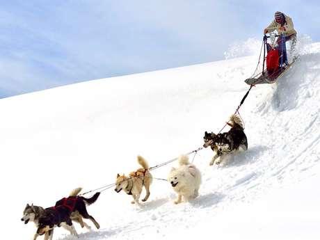 Perros esquimales - Angaka pueblo del norte
