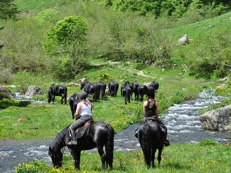 L'Ecrin des Cimes - Equitación