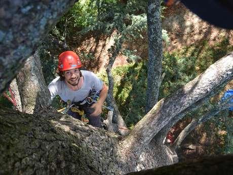 """Activité """"grimpe d'arbres"""" avec Haut Perché"""