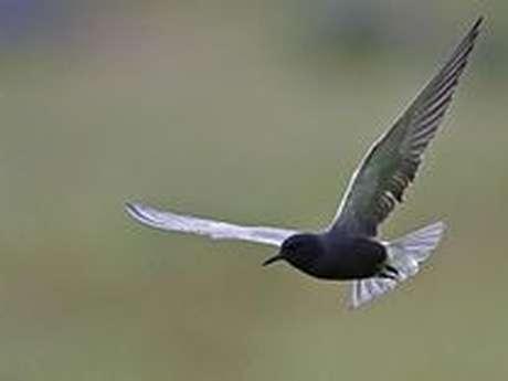 Découverte des oiseaux de chez nous