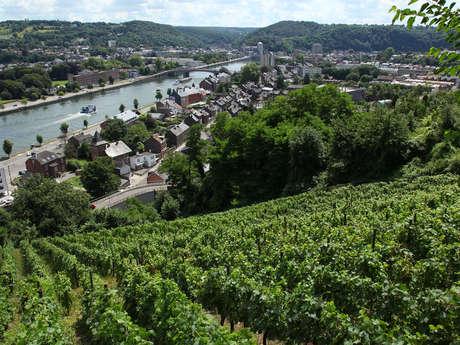 """Clos """"Bois Marie"""" et Hautes Vignes (AOC)"""