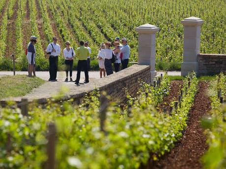 Visites de Vignes et Visites de caves - Olivier Leflaive