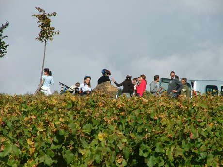 Wine & Tours