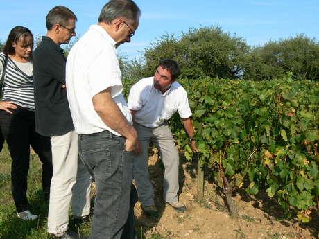 L'Atelier de la Vigne et du Vin
