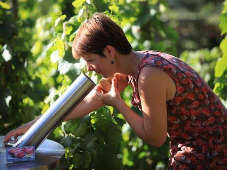 Parcours Olfactif des Vins
