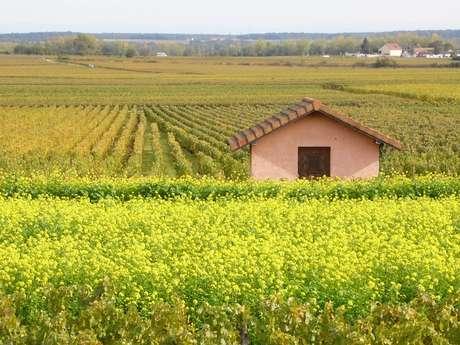 Séjours Wine&Break en Bourgogne - Côte de Beaune