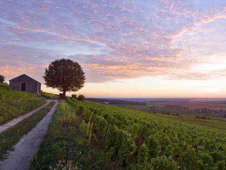 Bourgogne Randonnée : Le Chemin des Grands Crus - Dijon à Chalon-sur-Saône