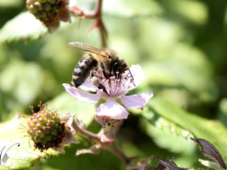 APISELECT - Station d'élevage de reines d'abeilles