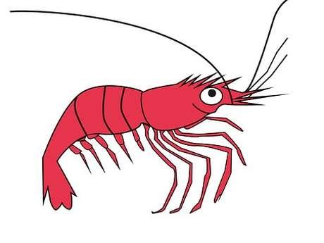 Animation LPO Vendée : Les devinettes de Mamzelle Crevette
