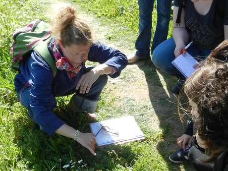 MODELE COVID Visite nature - Landes et Merveilles avec Sandrine, l'île en bandoulière