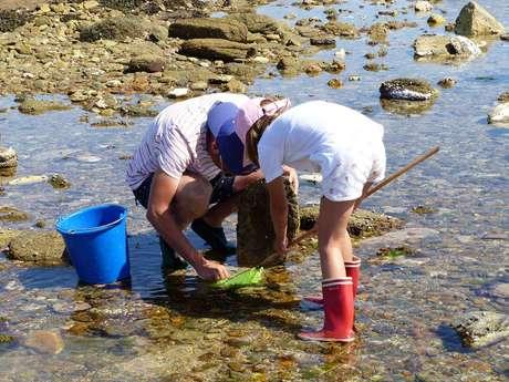 Pêche à pied en famille et découverte de l'estran (La Gournaise)