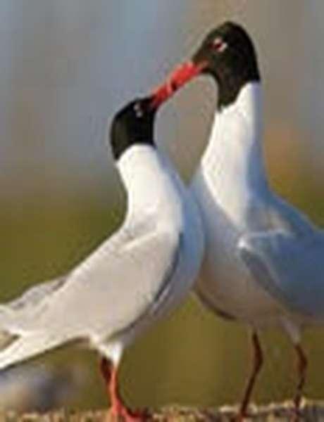Oiseaux et légendes