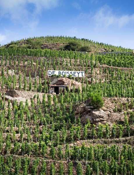 Ouverture estivale du dimanche Vignoble De Boisseyt