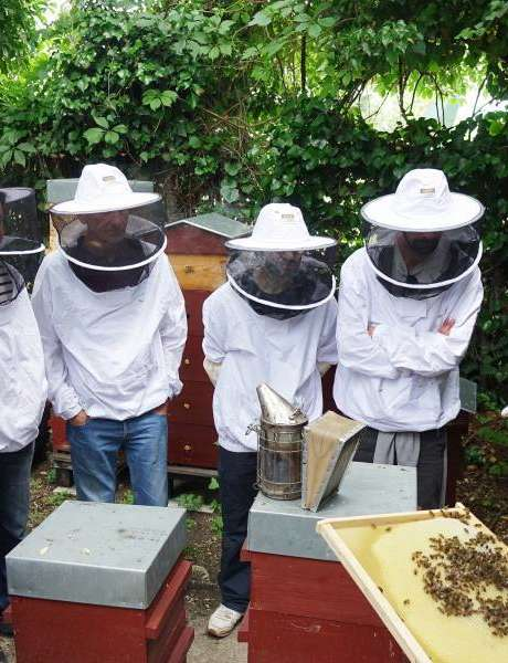 Cours d'initiation à l'apiculture à Zone Sensible