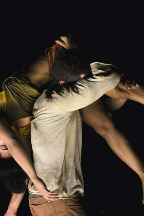 Cirque et danse : Phasmes