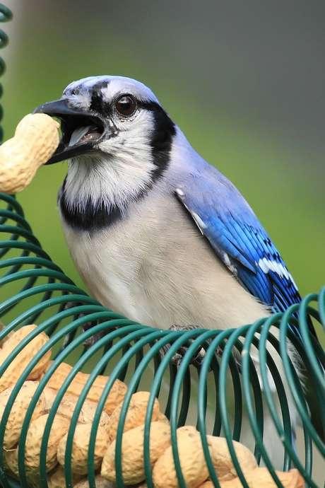 """Atelier récup"""" """"Fabrication de mangeoires à oiseaux"""""""