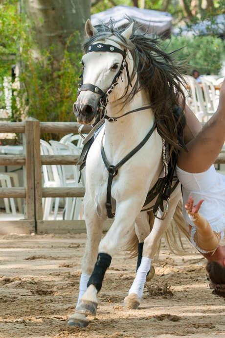 Les Rencontres Equestres