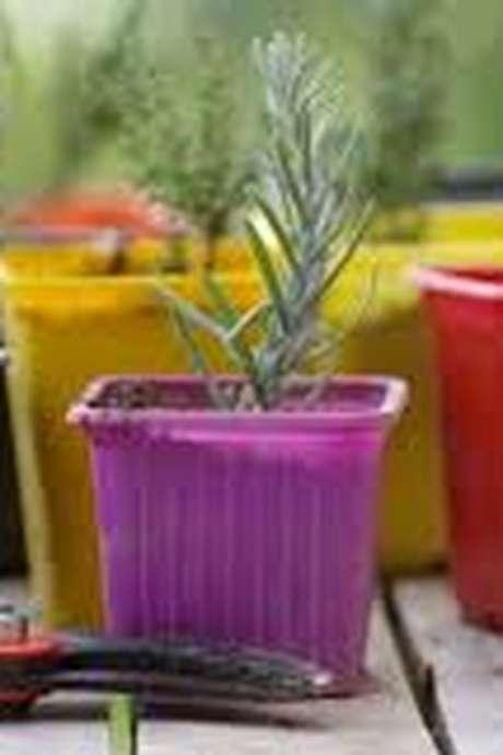 Atelier multiplication de végétaux