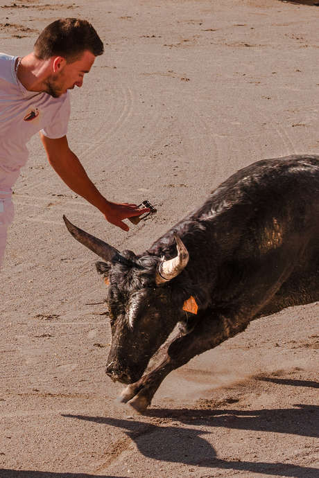 """Course camarguaise """"Challenge 2019 Terre d'Argence"""""""