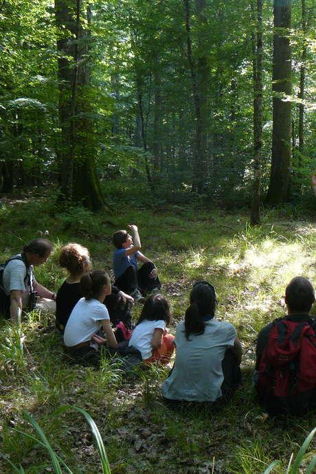 Balade nature contée: Les Malices des P'tites Bêtes de la Forêt avec Isabelle Sylvin et le Guide Nature