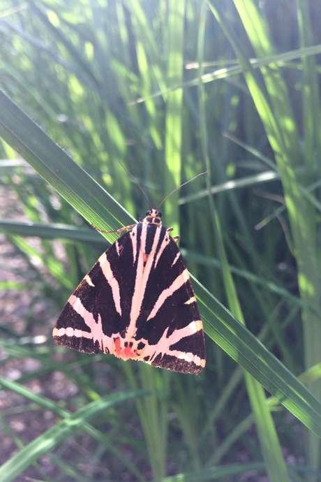 Papillons et compagnie