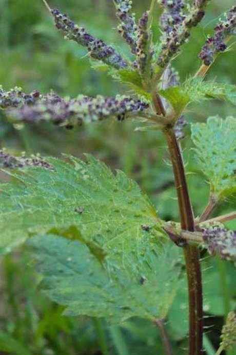 Découverte des plantes sauvages comestibles et dégustation - Nouveau