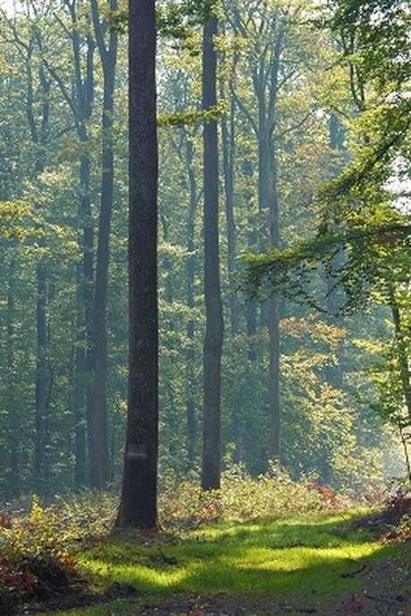 Sortie nature : A la découverte des champignons