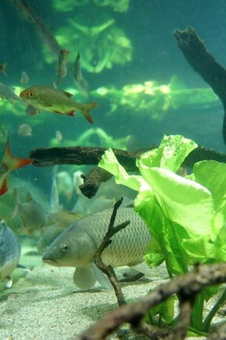 Aquarium des Curieux de Nature
