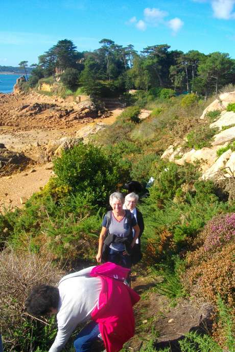 Sortie botanique à l'Ile Besnard et aux dunes des Chevrets