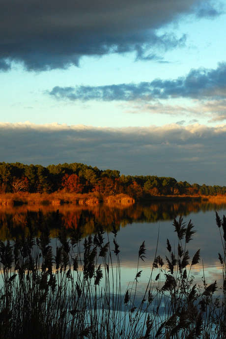 Guided Tour of the Natural Reserve of the Etang de Cousseau