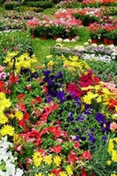 Les Floralies et Vide-Greniers