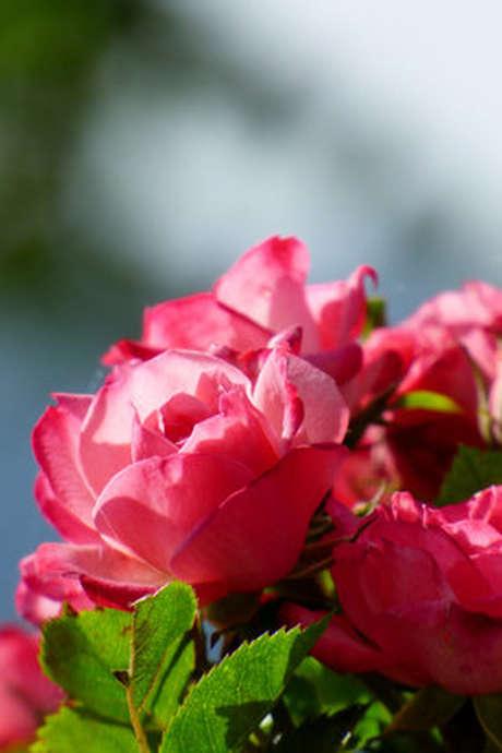 1ère Fête des Fleurs à Collonges
