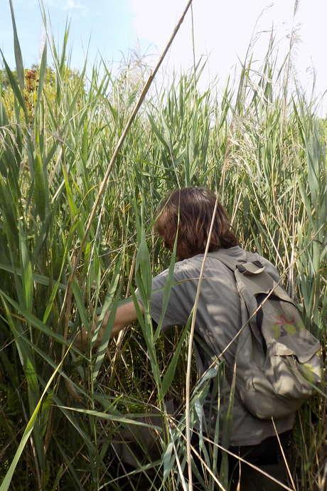 J'explore la nature en fin de journée au Marais de Bonnefont