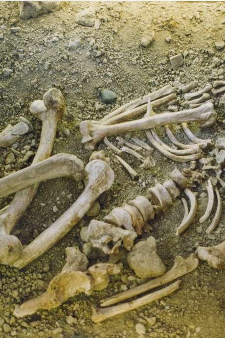 """Conférence : """"Dernières Nouvelles de Neandertal"""" par M. Patou-Mathis"""