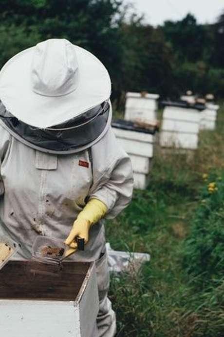 Les Rendez-vous en Champagne de l'Office de Tourisme - Visite de la miellerie et du rucher Hatier & Fils à Hautvillers