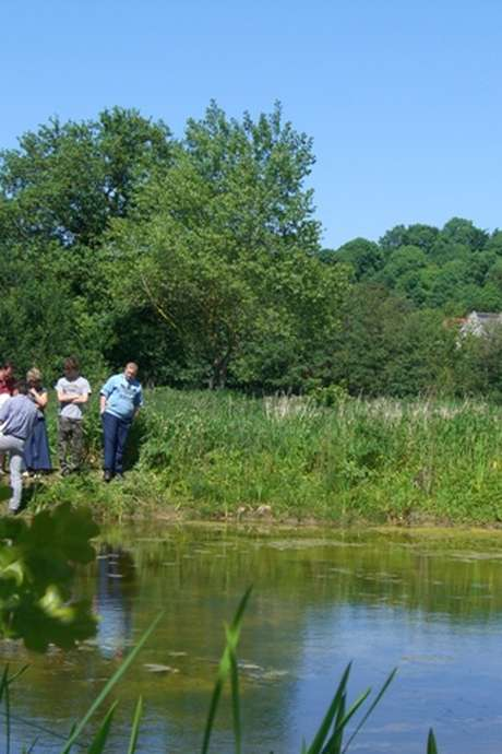 Découverte et dégustation des bienfaits de la nature au Marais de Longueil !