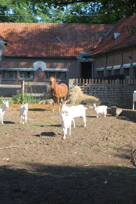 Portes ouvertes à la ferme de l'association l'Effet des Fées