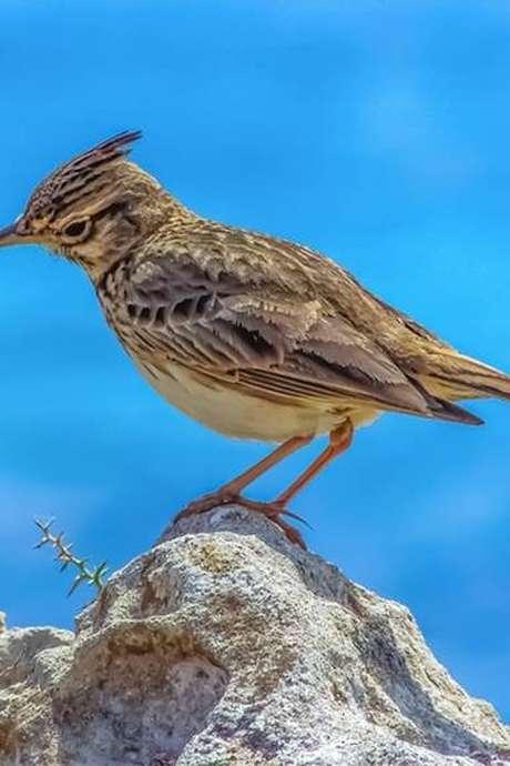 """Jeu de piste """"Les Oiseaux"""""""