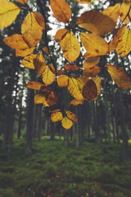 Les petits secrets de la Réserve Naturelle de la Pointe de Givet