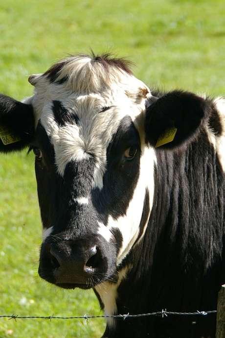 FERME OUVERTE : LE GAEC DE FARMANPRÉS VOUS ACCUEILLE