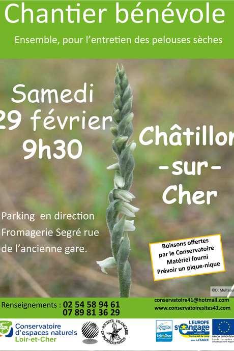 Restaurons les pelouses sèches ! à Chatillon-sur-Cher