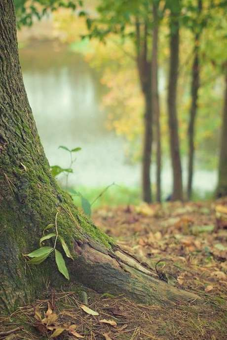 Sortie nature: Découverte de la forêt de Bellême