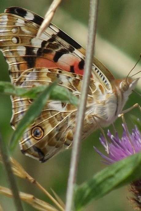 Découverte des insectes au coteau de La Bandonnière chasse aux papillons (spéciale famille)