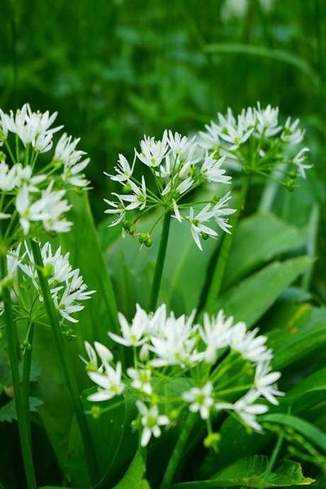 Balade et reconnaissance des plantes sauvages et comestibles