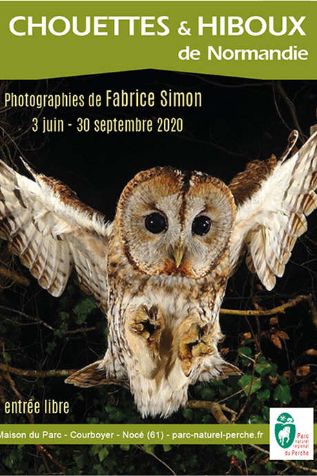 Chouettes et hiboux de Normandie, photographies animalières de Fabrice Simon