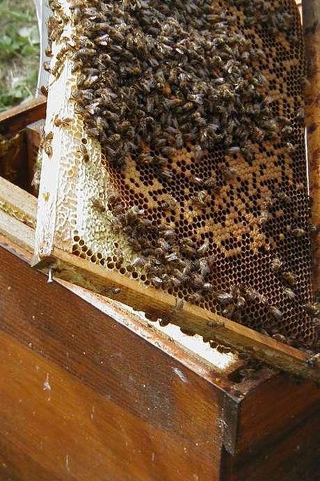 S'initier à l'apiculture (5ème séance)