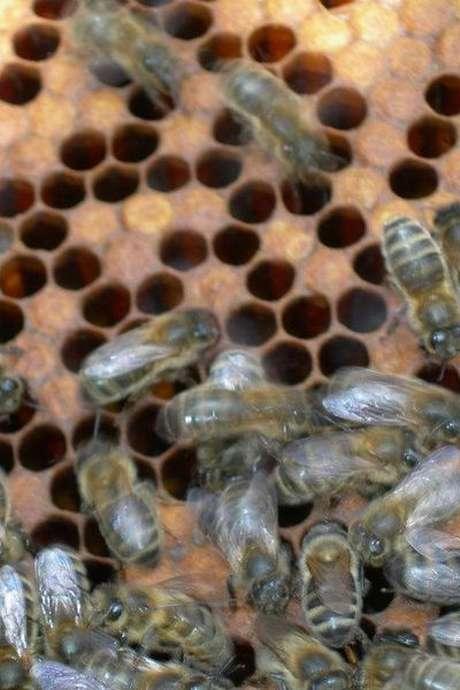 Un mardi à la campagne en famile : Récolte de miel