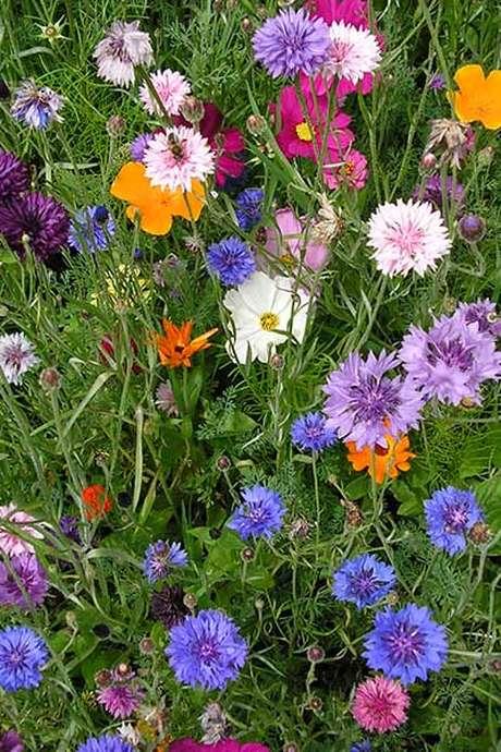 Les fleurs du printemps et leurs familles
