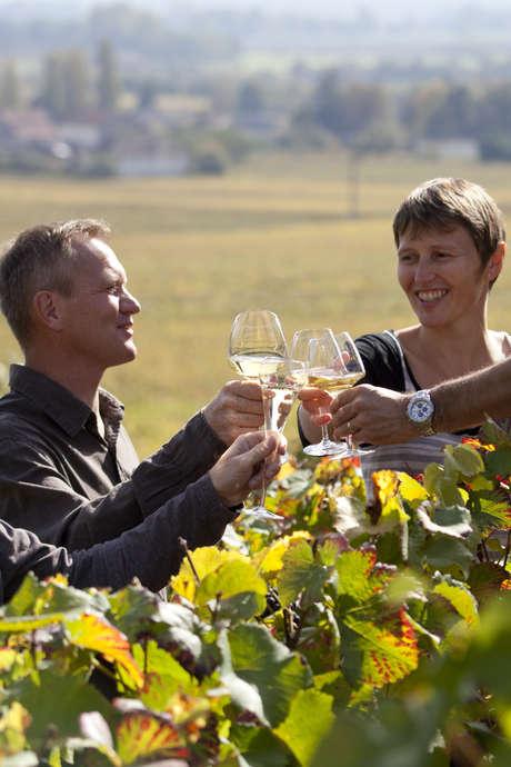 Balade entre vignes et vins