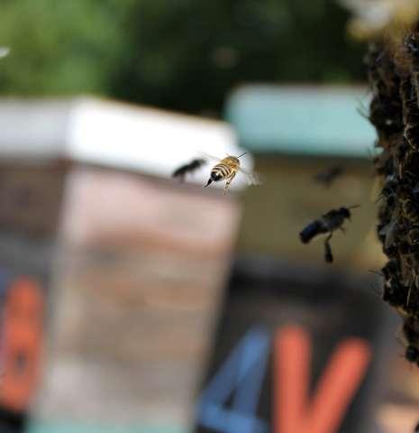 Visite du rucher et découverte de l'élevage de reine d'abeille